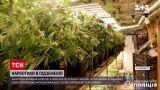 Новини України: на Закарпатті чоловік облаштував на своїй фермі потужну нарколабораторію