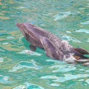 Дельфін вкусив хлопчика в одеському дельфінарії: дитину ушпиталили (відео)