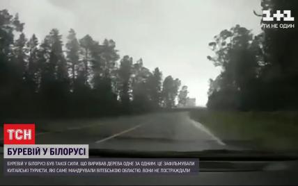 Білорусь накрив сильний буревій: вітер з коренем повиривав десятки дерев (відео)
