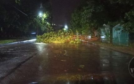 Смертельний буревій: у Львові дерево на смертьпричавило двох молодих людей