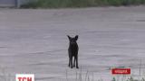 Социальные сети подорвало видео пса, который до сих пор сидит у ворот горящей нефтебазы