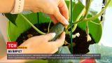 """""""На виріст""""   огород на балконе - как в квартире вырастить овощи на летний салат"""