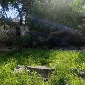 Шел по улице: в Хмельницкой области посреди города на 18-летнего парня упало дерево (фото)