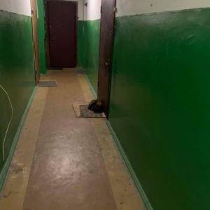 Невероятная верность: в Киеве кошка спит на коврике возле двери квартиры, откуда выехала ее хозяйка (фото)