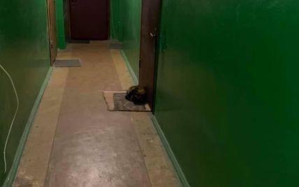 Неймовірна вірність: у Києві кішка спить на килимку біля дверей квартири, звідки виїхала її господарка (фото)