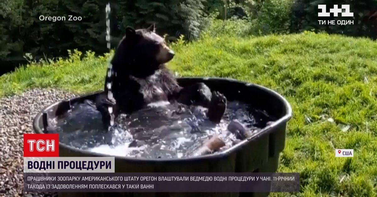 Новини світу: в американському зоопарку ведмедю влаштували SPA-день