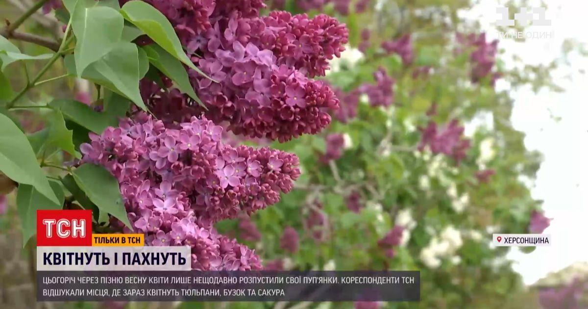Новости Украины: где порадоваться буйному цветению и сделать фото