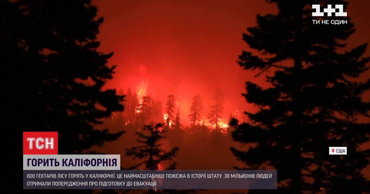 Найбільша за всю історію пожежа: у Каліфорнії горить понад 800 гектарів лісу