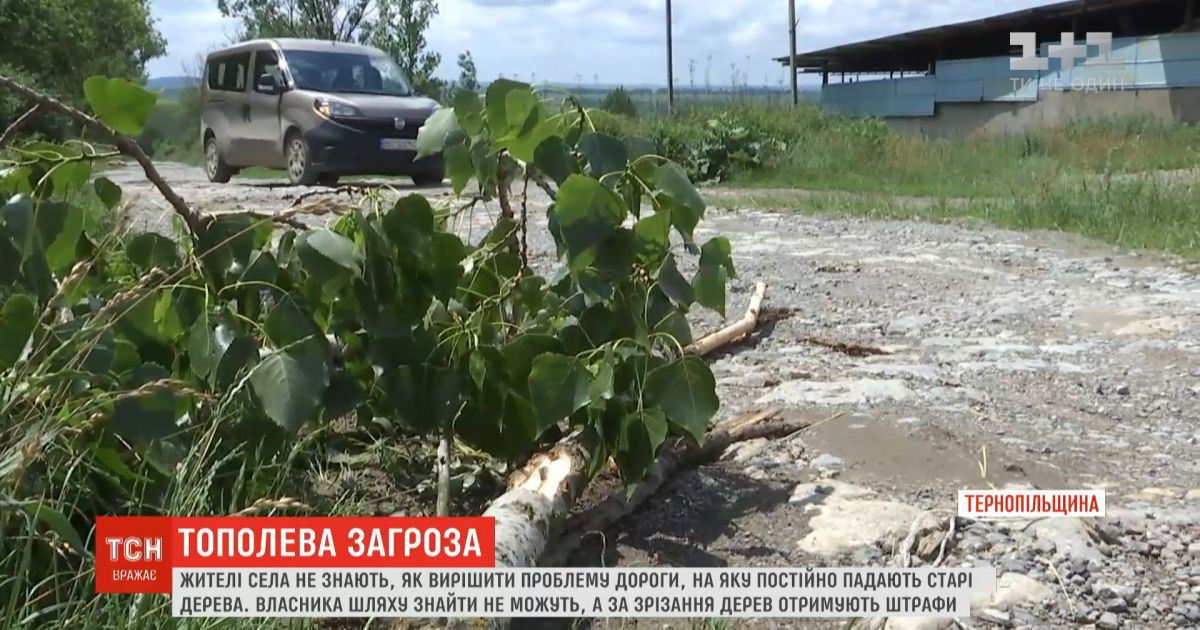 Жители села в Тернопольской области не знают, как решить проблему дороги, на которую падают старые деревья