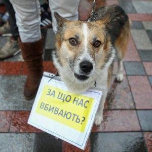 В Днепре защитники животных требовали ужесточить наказание для живодеров
