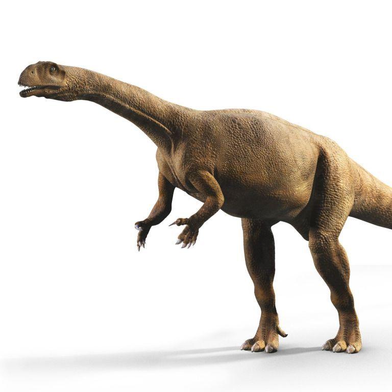 Вчені виявили динозаврів, що росли як дерева