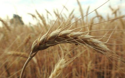 В Украине выросло производство сельскохозяйственной продукции