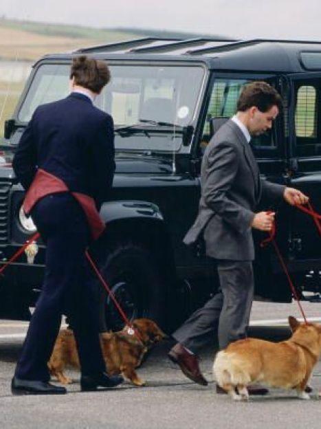 Собаки породы корги британской королевы Елизаветы II, 1980 год / © Getty Images