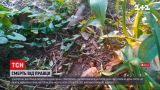 Новости Украины: смерть от столбняка в Запорожье - женщина вероятно заразилась на огороде