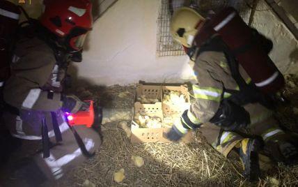 Біля Львова в потужній пожежі живцем згоріли 30 тисяч курчат