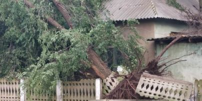 Вирвані з корінням і асфальтом дерева і потрощені дахи: у Мережі показали наслідки негоди в Одеській області
