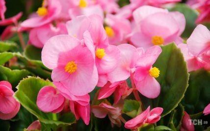 Тішитимуть усе літо: 5 видів квітів, ідеальних для балкона