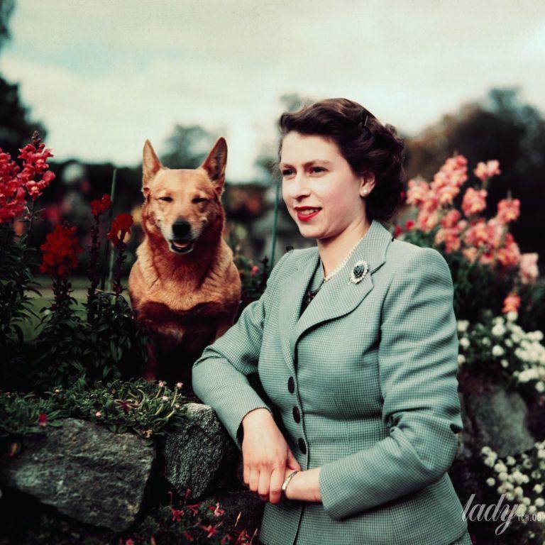 Королевские корги и не только: любимые собаки королевы Елизаветы II