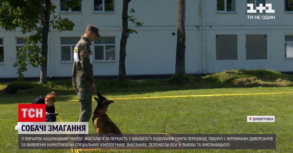 Новини України: у Вінницькій області на спеціальні кінологічні змагання зібрали собак Нацгвардії