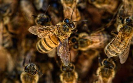 Понад 300 разів: агресивні бджоли до смерті покусали американця