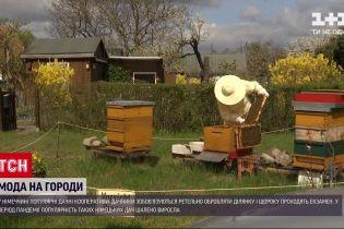 Новости мира: в Германии во время пандемии резко возросла популярность огородничества в городах