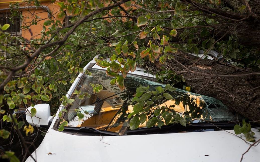 Огромное дерево рухнуло на Малой Житомирской / © facebook.com/sergii.morgunov