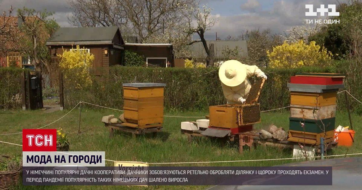 Новини світу: у Німеччині під час пандемії різко зросла популярність городництва у містах