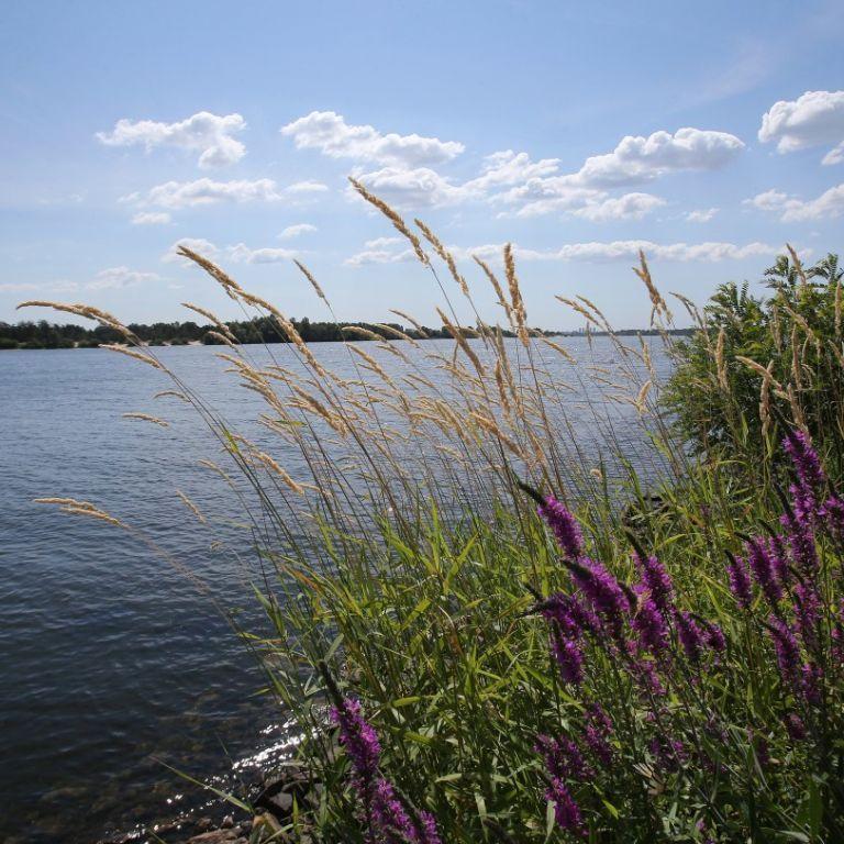 Погода в Україні: у п'ятницю, 18 червня, деякі регіони поливатимуть дощі, до інших прийде спека