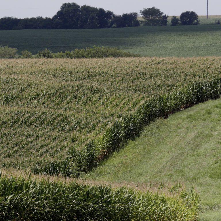 Продажа земли: Кабмин утвердил порядок проверки покупателей нотариусами