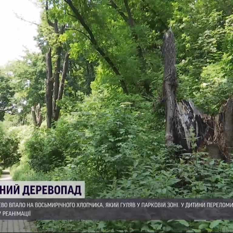 Во Львове на 8-летнего мальчика упало дерево во время прогулки в парке