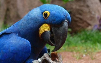 Разговорчивый попугай в Аргентине помог раскрыть убийство и изнасилование своей владелицы