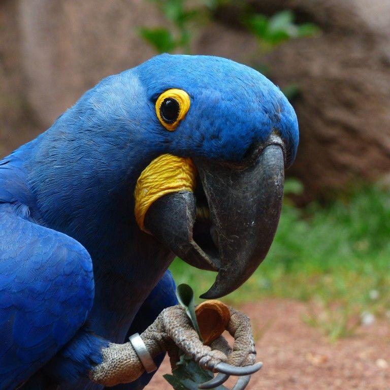 У Таїланді папуга з'їв діамантове намисто і потрапив до лікарні