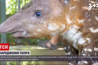 Новини світу: у зоопарку Нового Орлеана народився малюк рідкісного тапіра