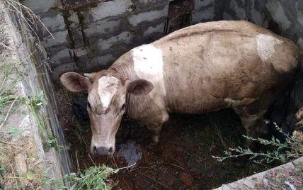 Упала в яму: на Днепропетровщине спасатели доставали корову из ловушки
