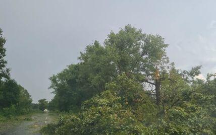 Буковиною пронісся буревій: дороги встелило поваленими деревами і гілками (відео)