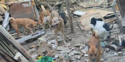 У Полтаві нові господарі руйнують притулок, де жили 70 собак: тварин нікуди подіти