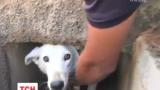 У Перу цілий день рятували безпритульного собаку, що заблукав у підземному каналі