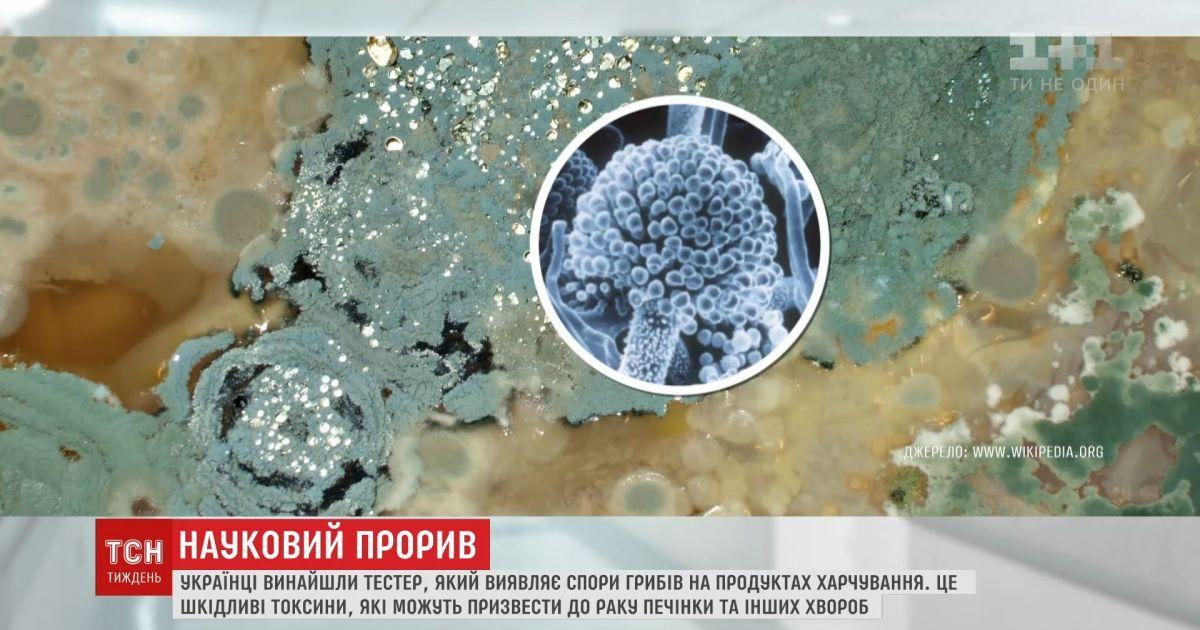 Українці винайшли тестер, який виявляє токсини, що виробляються грибами