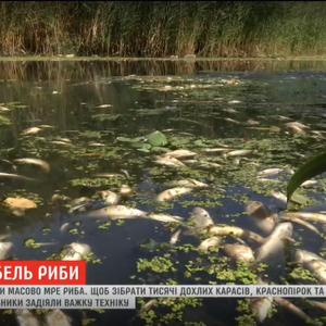 Падаль на берегах і жахливий сморід: у Харкові в річці Уди масово гине риба