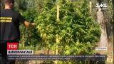 Новини України: у Херсонській області правоохоронці виявили нелегальну наркоплантацію