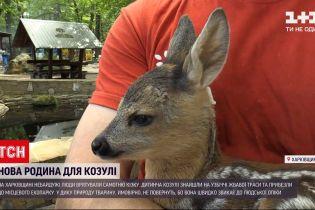 Новости Украины: в Харьковской области на обочине трассы нашли детеныша косули