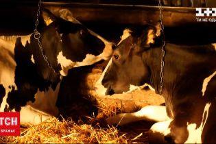 ТСН. Тиждень розповість, чому мутувало молоко і де знайти корисне