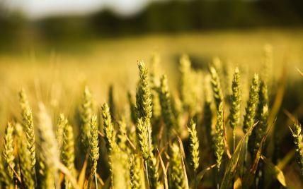 Україна ввійшла у четвірку країн за рівнем експорту сільськогосподарських товарів у ЄС