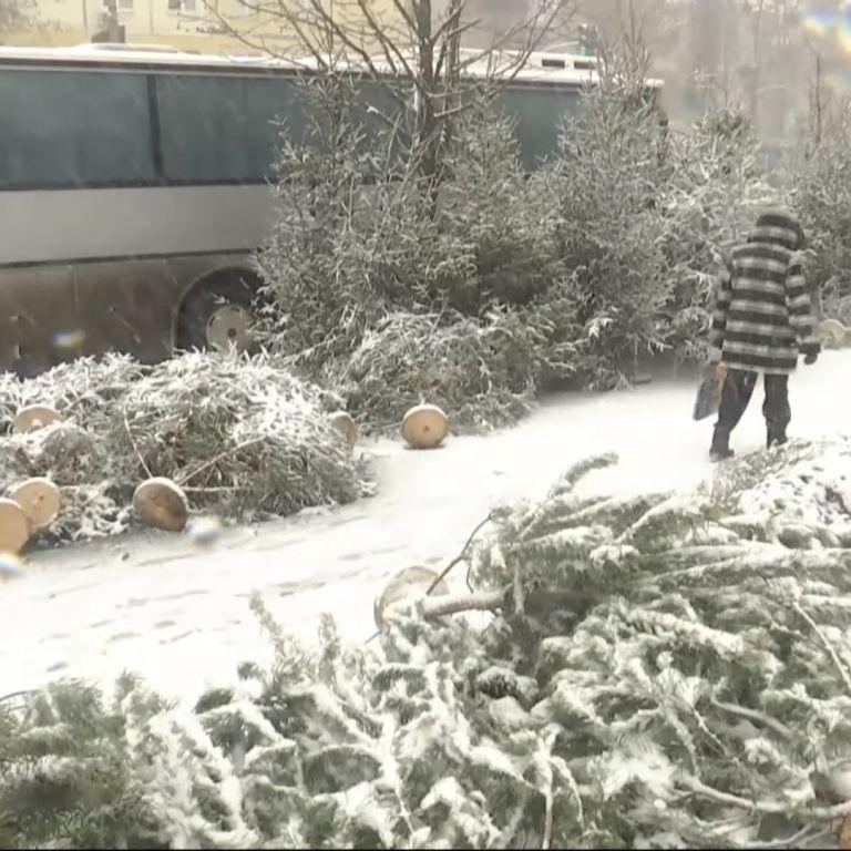 Ялинкові базари: чи легально продають новорічні дерева в Україні