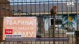 Новини України: у приватному зоопарку пантера покусала чоловіка – загрози для життя немає