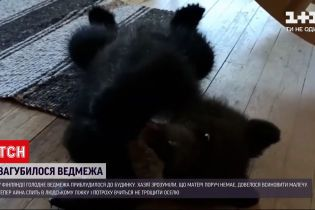 Новини світу: у Фінляндії люди знайшли самотнє ведмежа на своєму подвір'ї і прихистили його