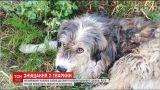 На Киевщине мужчина избил собаку и бросил тело под ноги женщине, которая заботилась о животном