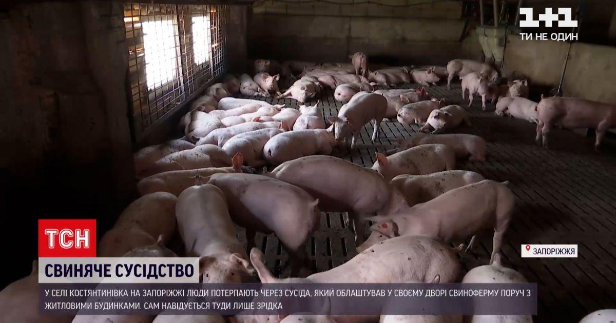 Новини України: у Запорізькій області чоловік облаштував свиноферму просто серед житлових будинків