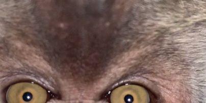 В Малайзии обезьяна украла у парня айфон и наделала селфи