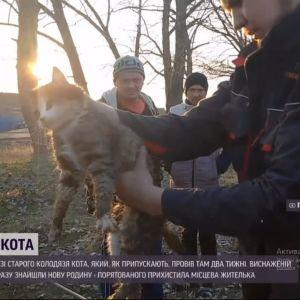 Кістки та шкіра: під Харковом врятували кота, який просидів у колодязі зо 2 тижні